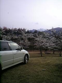 車と桜と雪山